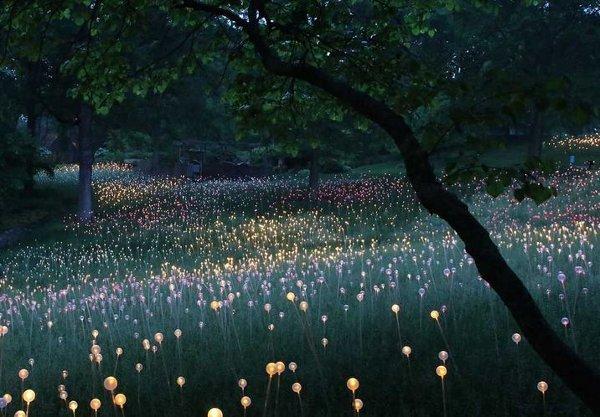 Bruce Munro Longwood Gardens