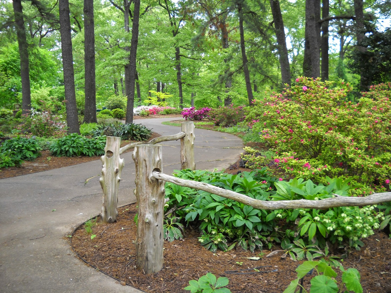Divers and sundry memphis botanic garden azaleas for Garden trees memphis