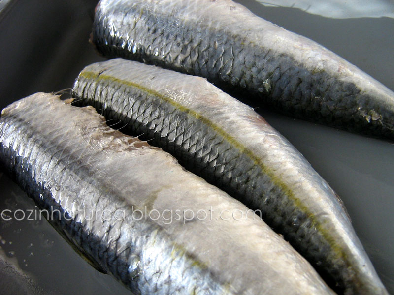 Savelha ou Saboga (Tirsi)