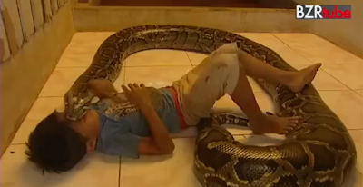 Kid playing with a Huge Snake