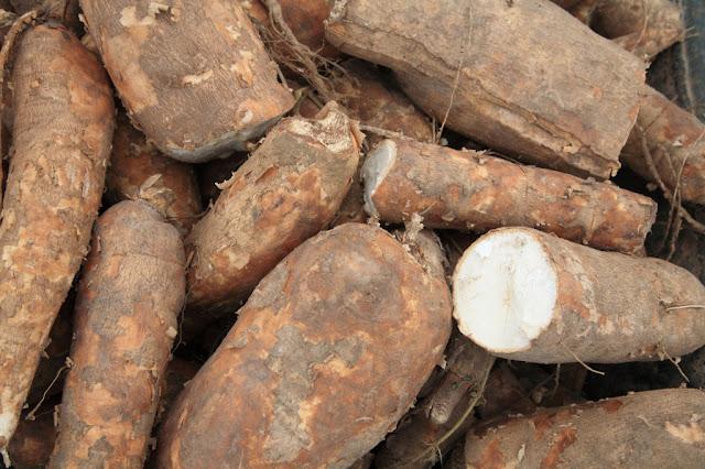 singkong dan biji aprikot yang bisa menyembuhkan penyakit kanker