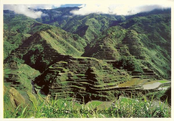 green rice terraces in the Philippines