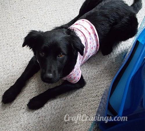 http://craftcravings.com/2014/01/convert-onesie-dog-shirt.html