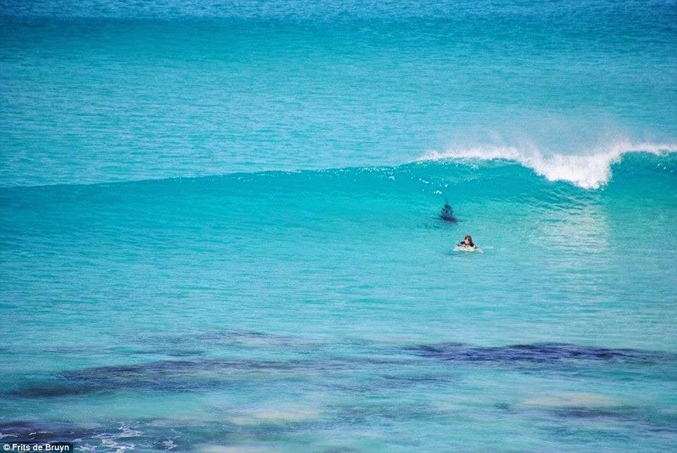 surfistas perseguido por tiburon 01
