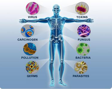 مناعة الجسم, المناعه الطبيعيه, المناعة الطبيعية, المناعة في جسم الإنسان, مناعة الجسم و سلامته , الجراثيم و المناعة , تصدي الجسم للجراثيم, المناعة و الجراثيم , مناعة الجسم و صحته