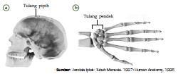 Fungsi dan Perbedaan Tulang Rawan dan Tulang Keras