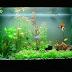 Chọn loại cá và hình dáng bể cá treo tường thích hợp cho nhà của bạn