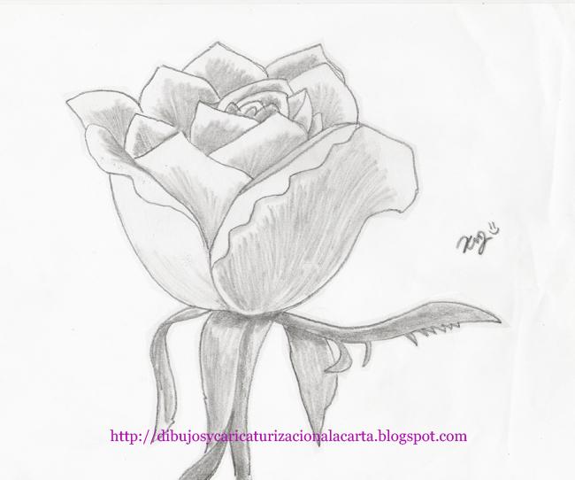 Imagenes De Rosas Dibujos a Lapiz