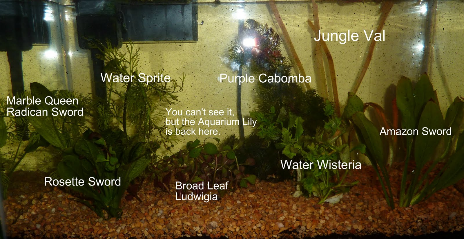 One penny jumble packet setting up a natural planted tank for Fish tank ice method