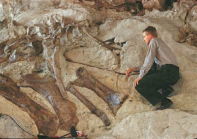 Fossil Specimens Advantages