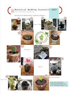 kaktus, sekulen, tanaman