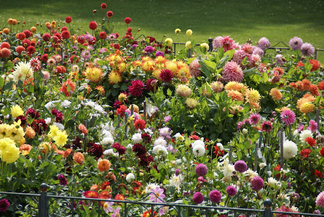 Admittedly Not The Best Picture, But At Least It Gives You A Good Idea  About The Size And Design Of The Dahlia Garden.