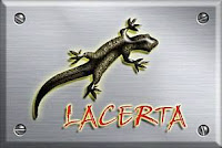 Lacerta