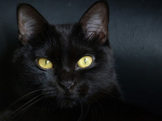 black cat, superstition