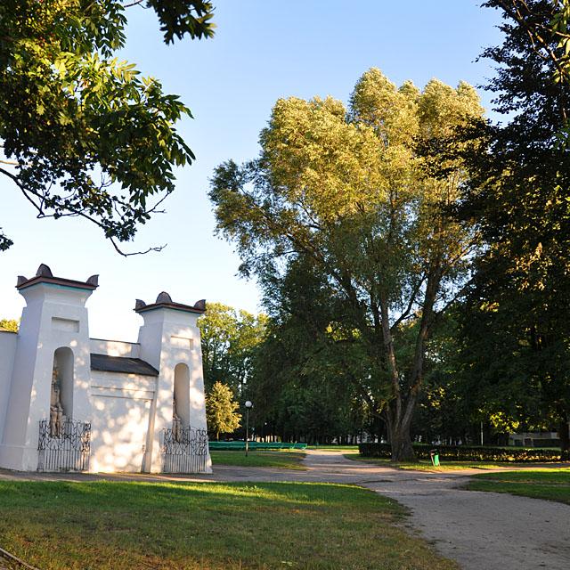 Końskie, Park Miejski im. Tarnowskich - płacząca topola.