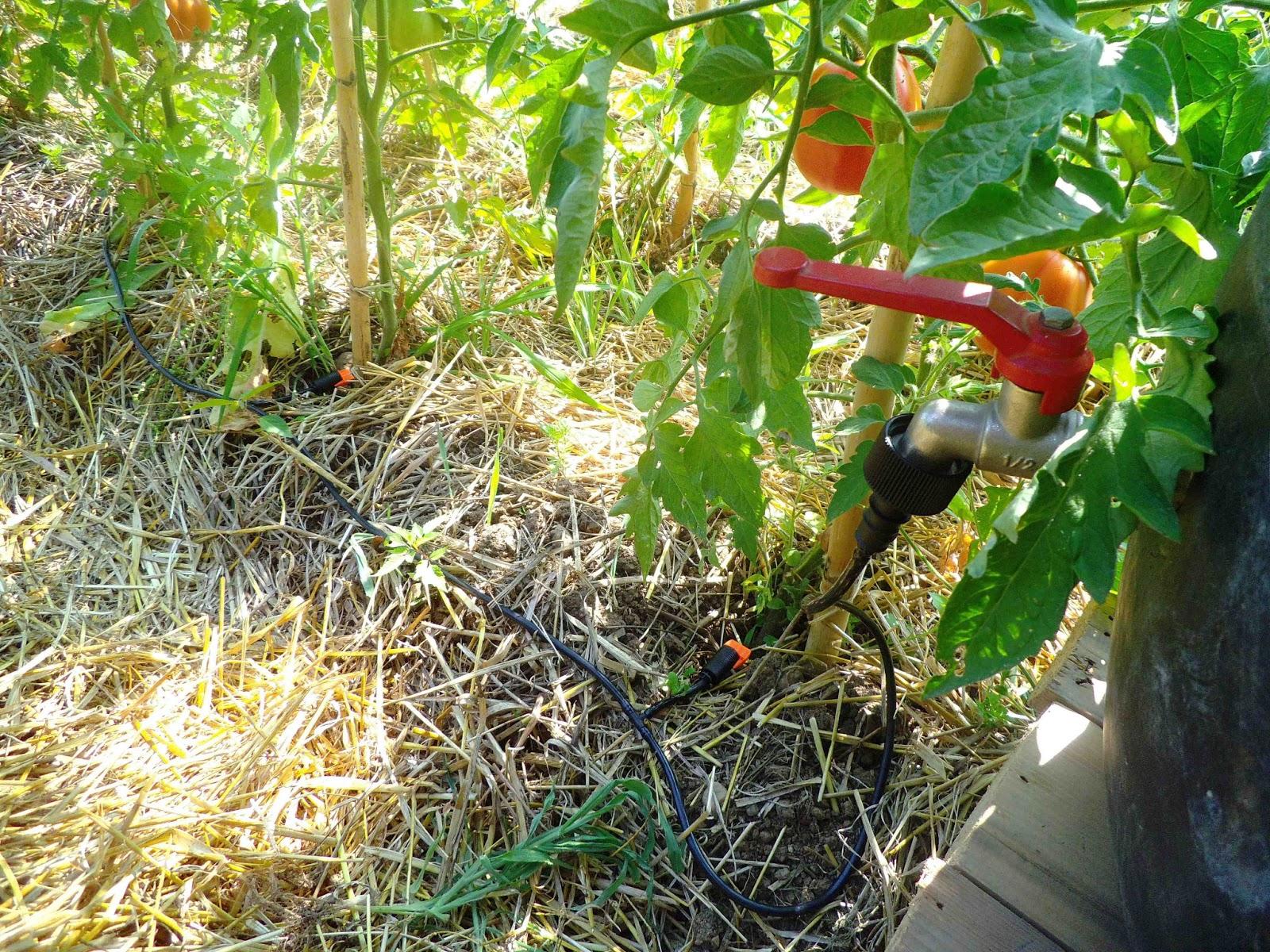 Ortoinsorto semi digitali impianto di irrigazione for Temporizzatore irrigazione