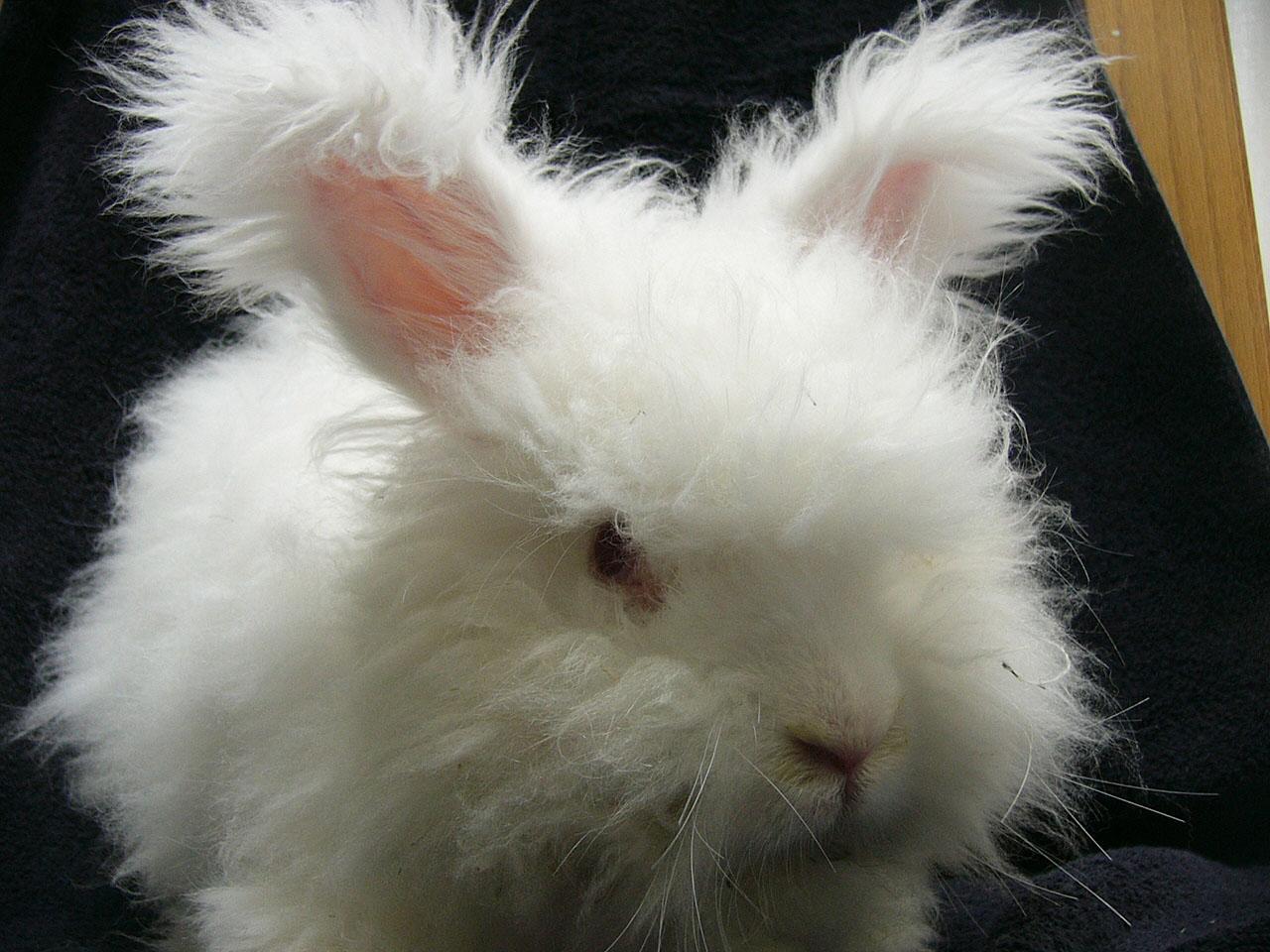 Fuzzy Like A Bunny Knitting With Rowan Angora Haze