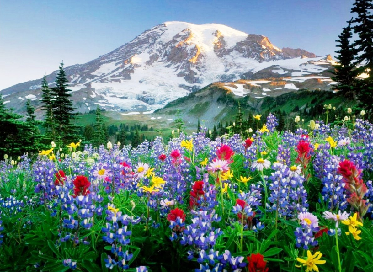 para fondos de pantallas fotos bonitas de paisajes con flores