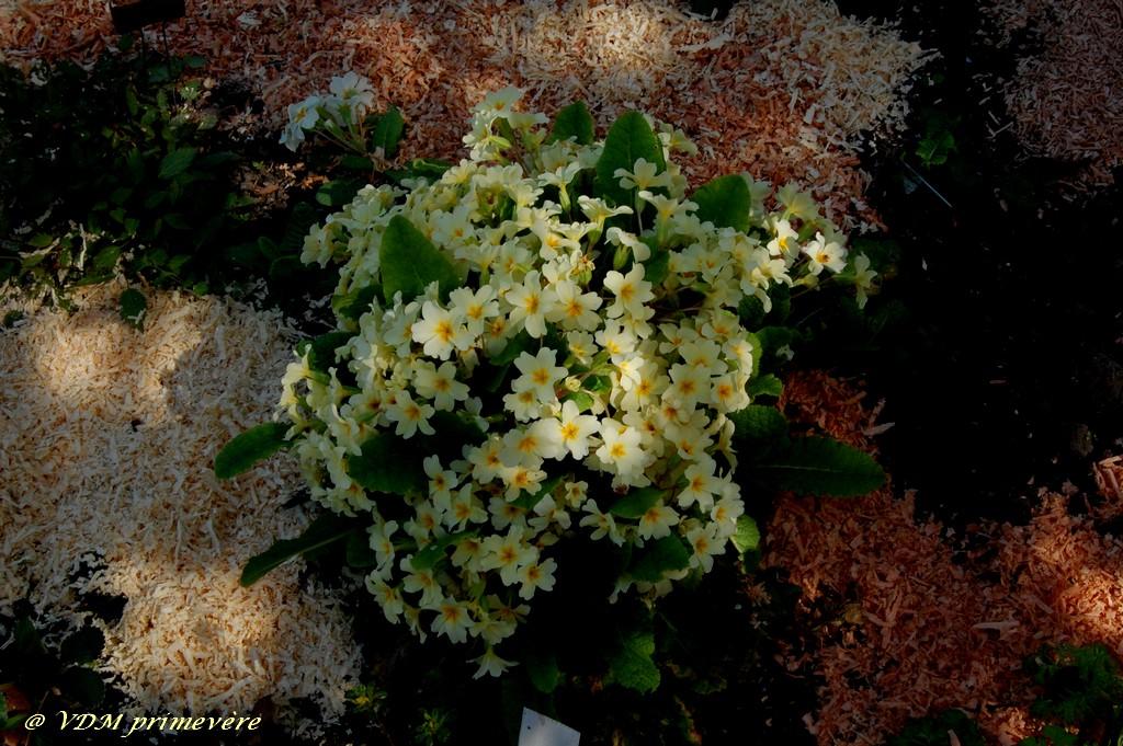 Le jardin de nanny en 2011 jardin des plantes d 39 ombre ok for Jardin google translate