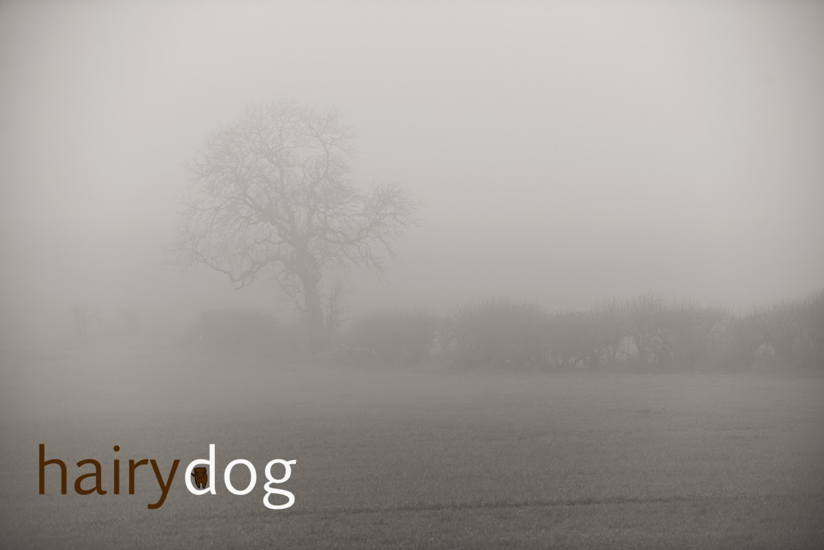 Pet photographer Jamie Emerson walks through a misty Durham field