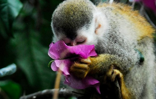 titimonkey2 - Stop and smell the flowers - Photos Unlimited