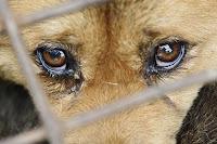 Ambulantes de Santos vendem cães vivos para consumo em navios coreanos