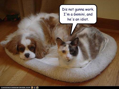 Happy Wednesday Cat Happy Wednesday Cat Lovers