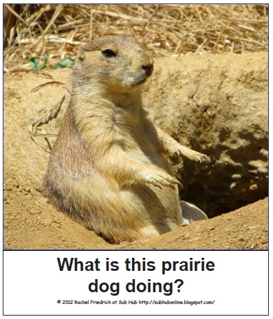 the prairie dog essay List of animal names  an essay on hunting published in 1486 and attributed to juliana berners  prairie dog: pup: sow: boar: town: cynomurine: q: quail: chick: hen.