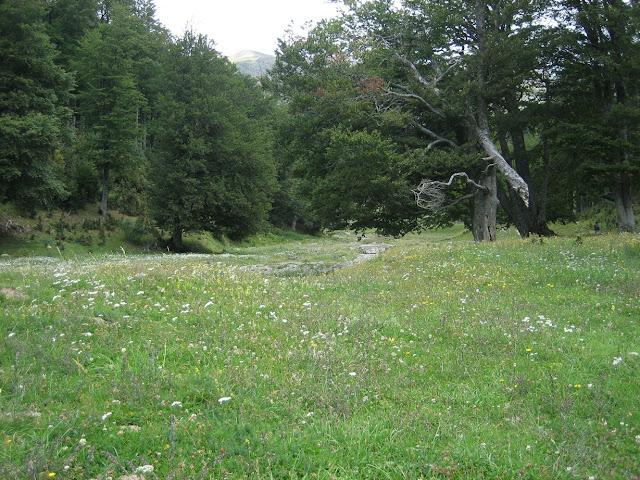 Bosc de Linza