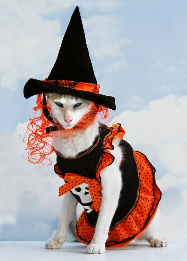 Funny halloween animals 13