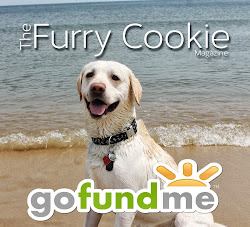 Click here to help fund The Furry Cookie!