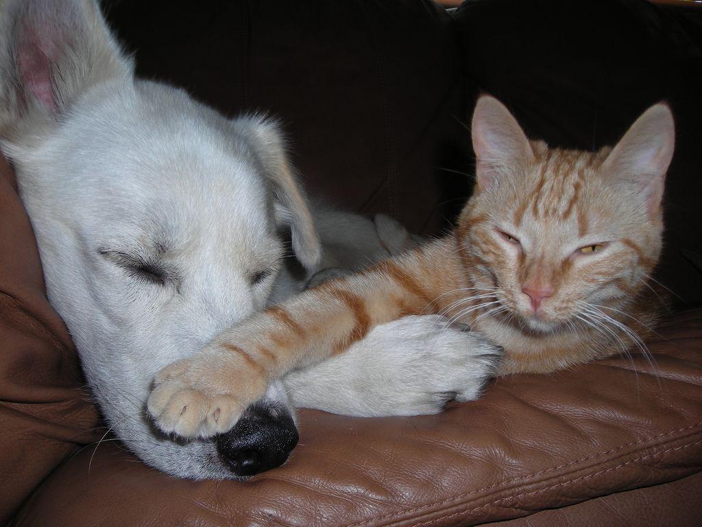 40 φωτογραφίες που αποδεικνύουν ότι γάτες και σκύλοι μπορούν να γίνουν οι καλύτεροι φίλοι!