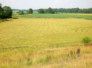 mowed hayfield