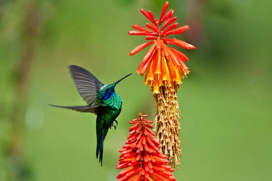 Dessin Oiseau Mouche dessin et peinture - vidéo 2136 : comment peindre le vol du colibri