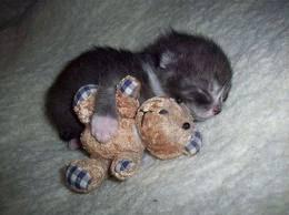 kcing ni ade teddy bear.woah...