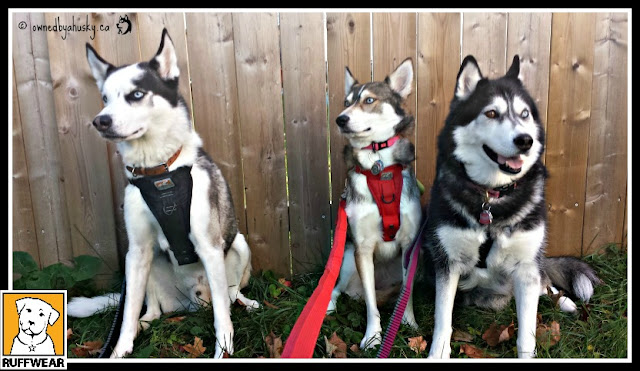 Huskies Love Ruffwear Roamer™ Dog Leashes