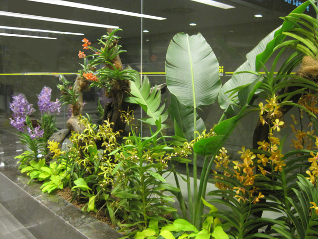 Tropical Garden And Landscape Professionally Designed
