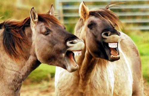 gallery funny laughing animals