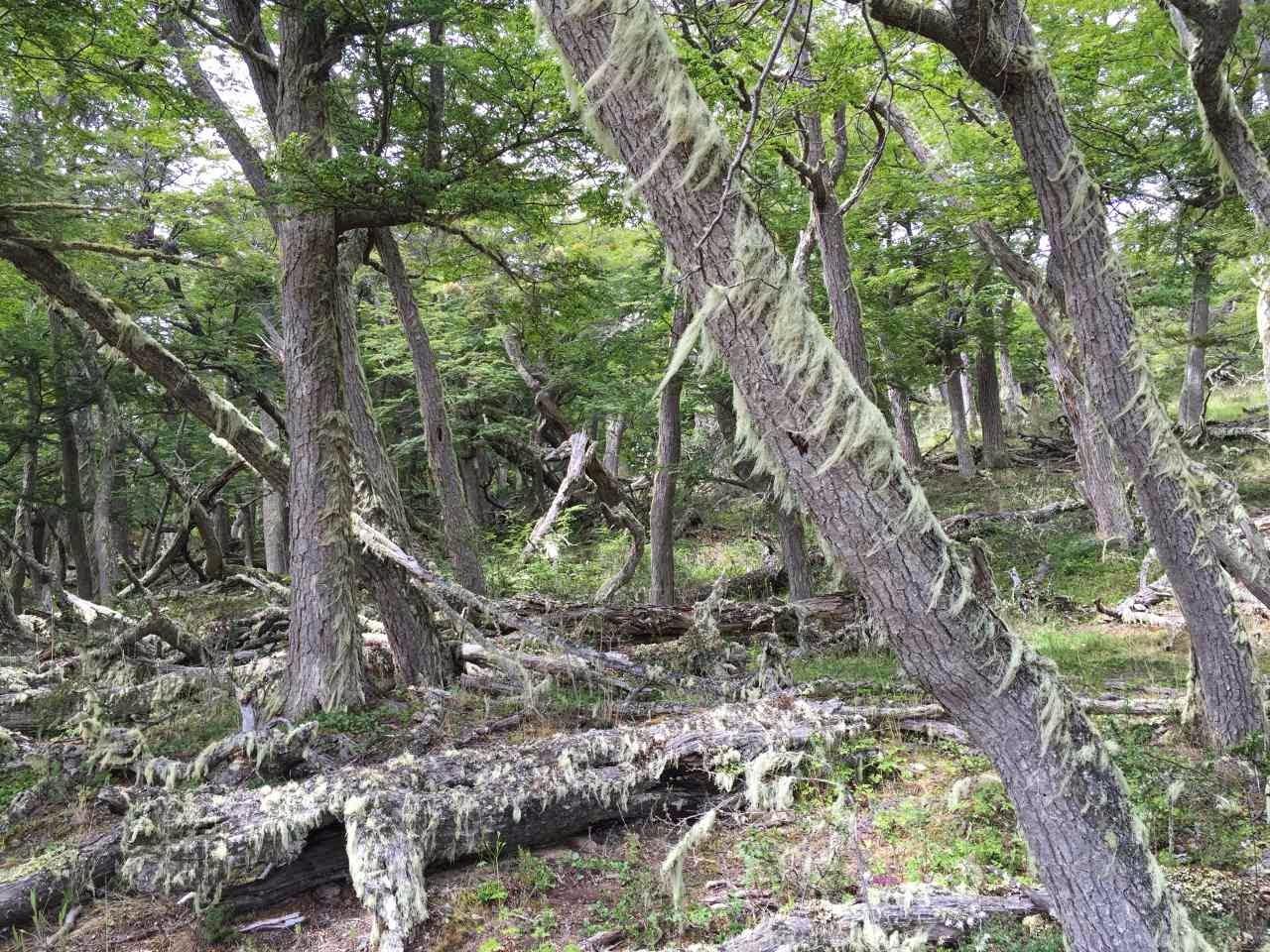 Ushuaia 4x4 Offroad tour - mystischer Wald mit viel Moos