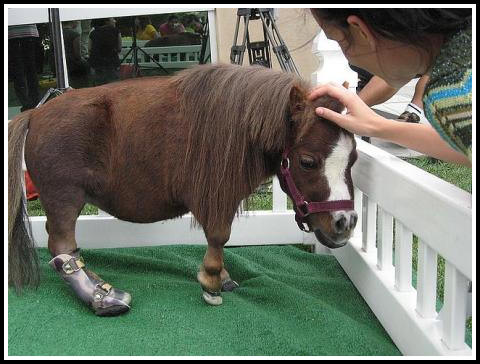 the smallest in the world horse  horse in the world worlds