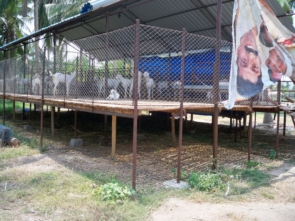 Yarasool goat farm developer consultant goat shed plans for Farm shed ideas