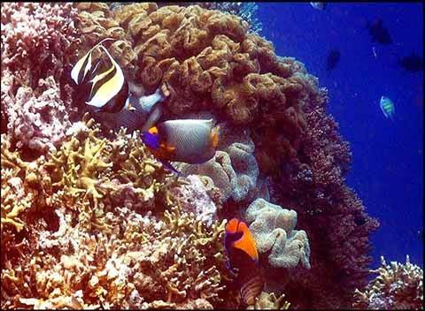 keindahan karang wakatobi