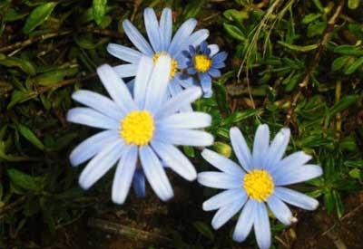 Flores-silvestres ESTAS SON LAS FLORES DE SUDAFRICA