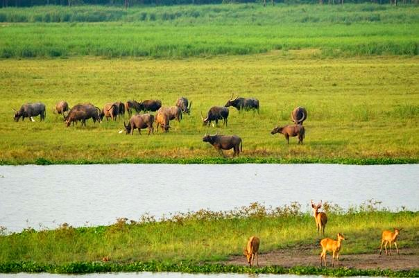 Wild animals at Kaziranga National Park (photo - Nassif Ahmed)