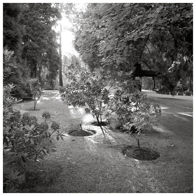 foto de amanecer en el jardín del Museo Evaristo Valle