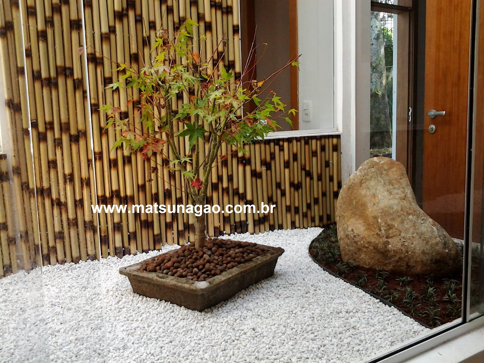 jardim zen; bonsai; jardim de inverno; acer palmatum