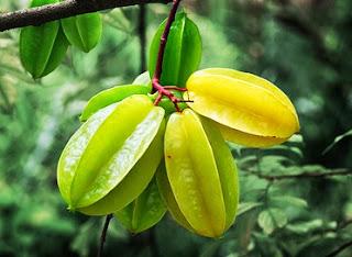 manfaat-buah-belimbing
