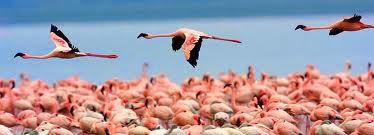 Barack Obama safari, Obama trail in Kenya, Obama heritage, Kogelo, Holiday in Kenya, Safari in Kenya, African wild, Mount Kenya, The Great Rift Valley, Amboseli National Park,