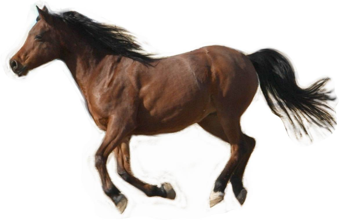 horse pic: