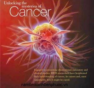 Nấm lim xanh chữa bệnh ung thư gì?